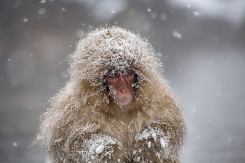 Brown and White Monkey on Snow Covered Ground