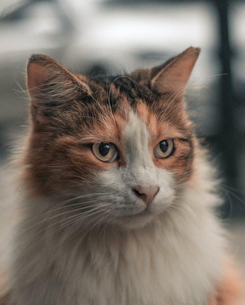Cute obedient cat looking away on street