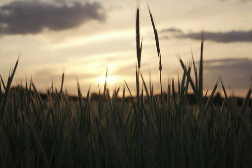 Fotos de stock gratuitas de agricultura, agronomía, al aire libre, amanecer