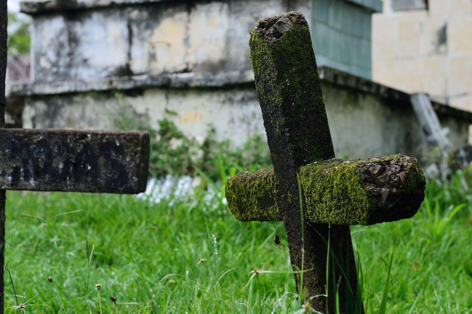 New free stock photo of grass, moss, stones
