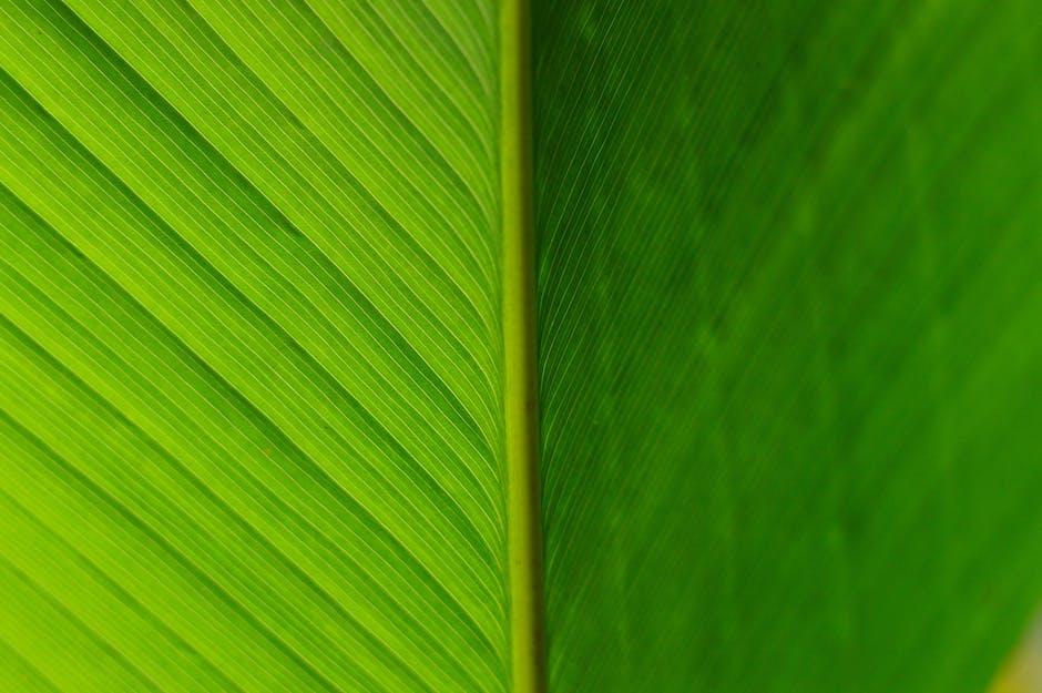 Abstract beautiful blur botanical