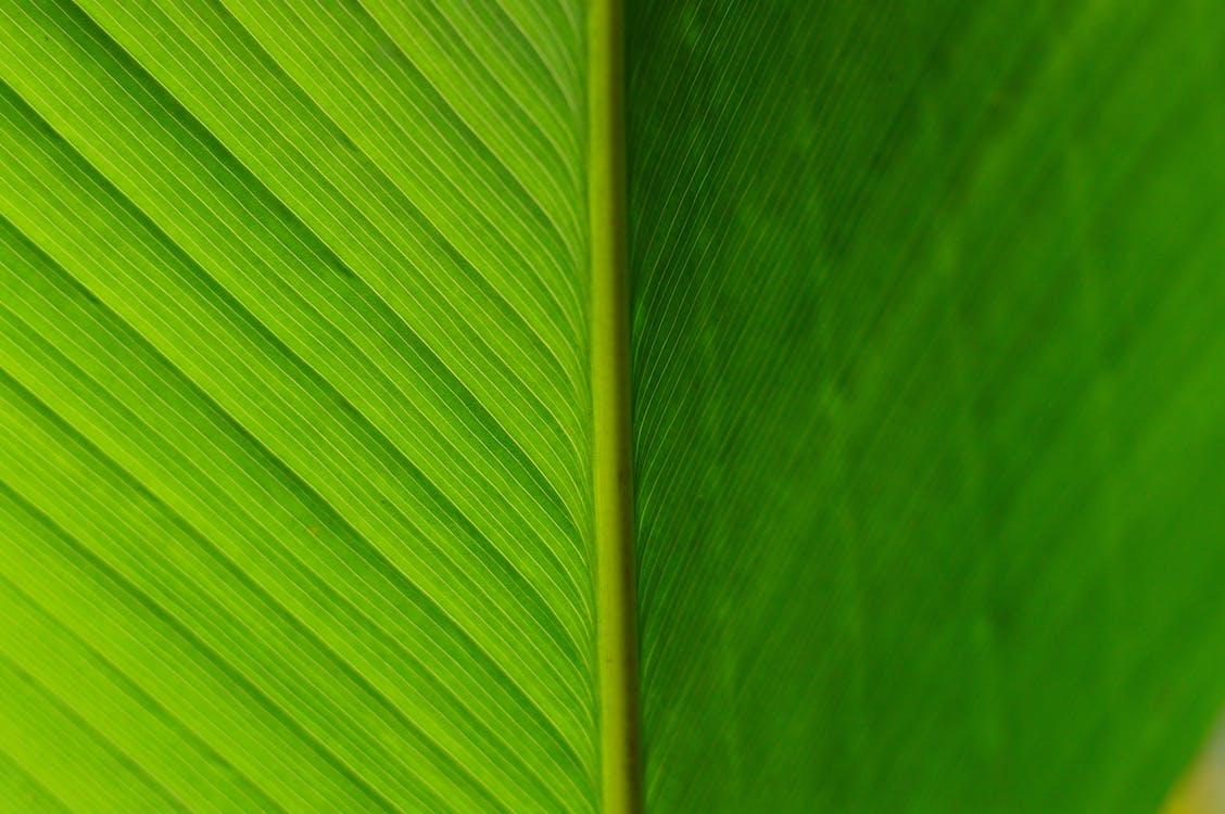 abstrakti, ekologia, jousi