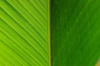 nature, summer, pattern