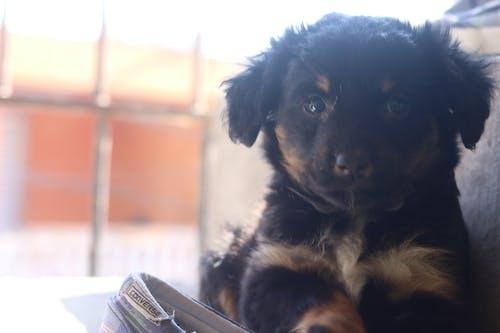 Free stock photo of amante do animal de estimação, amante dos animais