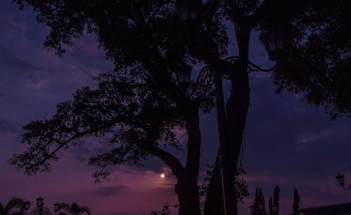 Základová fotografie zdarma na téma krajina, slunce
