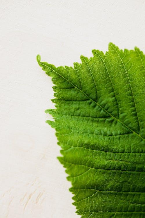 Green leaf on light background