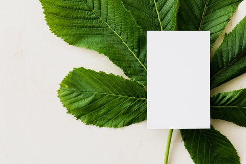 Overhead view of blank greeting card placed on green chestnut tree leaf on light background