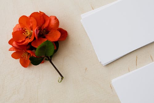 Blank white visiting cards and red flower on wooden table