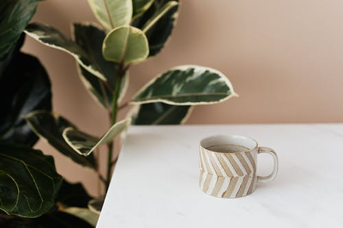 Brown and white striped ceramic cup of coffee placed on white marble table near big green ficus plant