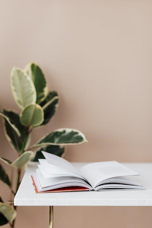Gratis stockfoto met bibliotheek, binnen, binnenshuis, boek
