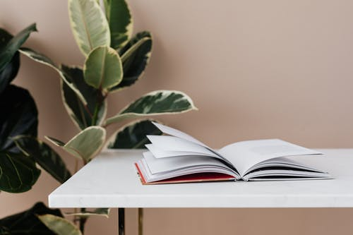 Book left open on white table in modern room with green ficus plants