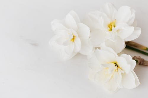 White narcissus flowers on marble table