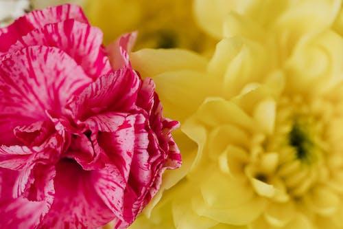Closeup of chrysanthemum and carnation bouquet