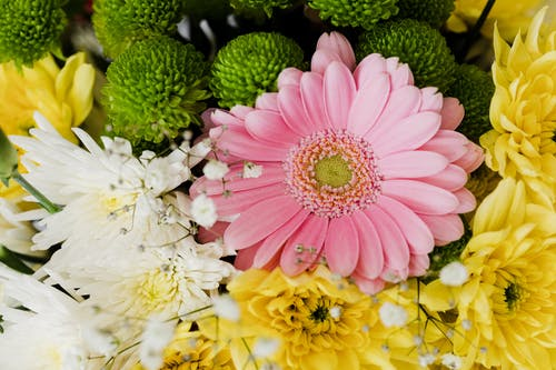 From above of pink gerbera and chrysanthemums of different colors arranged in elegant romantic bouquet accompanied with tender gypsophila