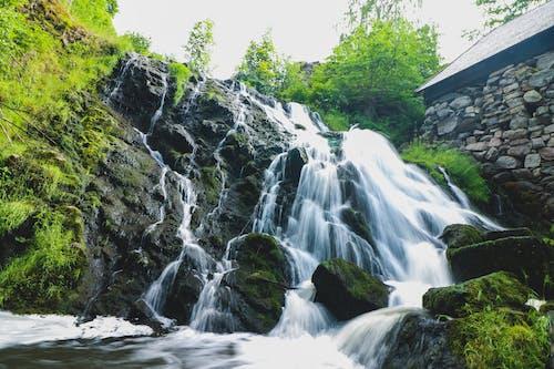 Бесплатное стоковое фото с HD-обои, вода, водопад, деревья