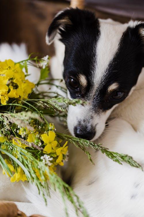 Kostnadsfri bild av äng, arom, blandras, blomma