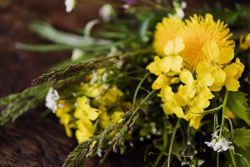 Kostnadsfri bild av äng, arom, bänk, blomma