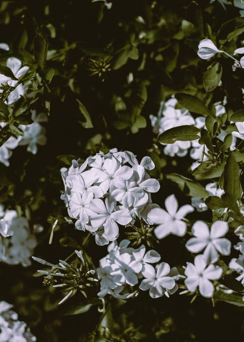 White flowers on green tree