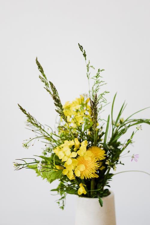 Kostnadsfri bild av äng, arom, arrangemang, blomma