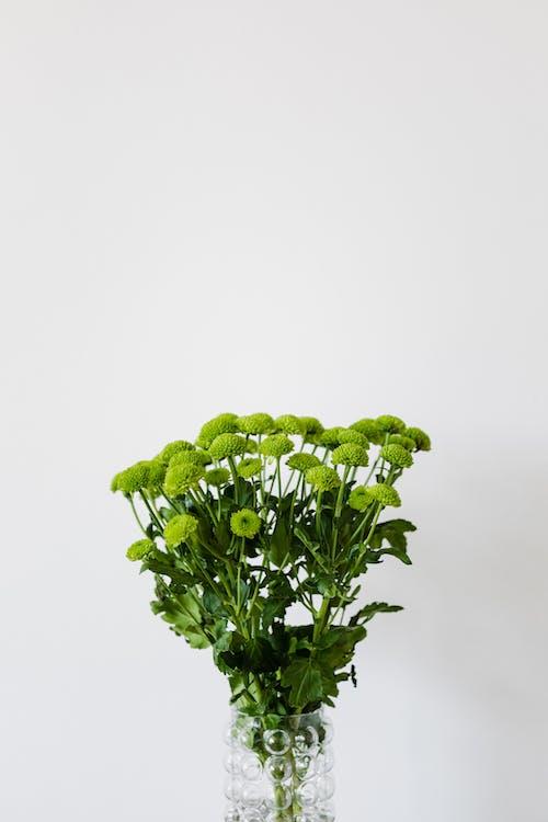 Kostnadsfri bild av aromatisk, arrangemang, blomma, bukett