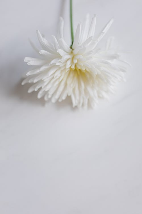 Kostnadsfri bild av arom, aromatisk, begrepp, blomma