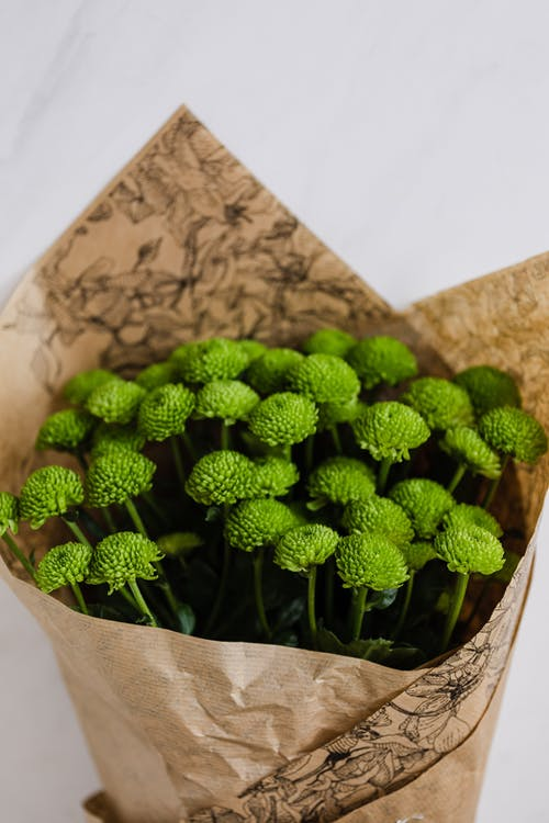 Bouquet of green craspedia wrapped in packaging