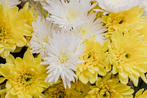 Bunch of yellow and white flowers