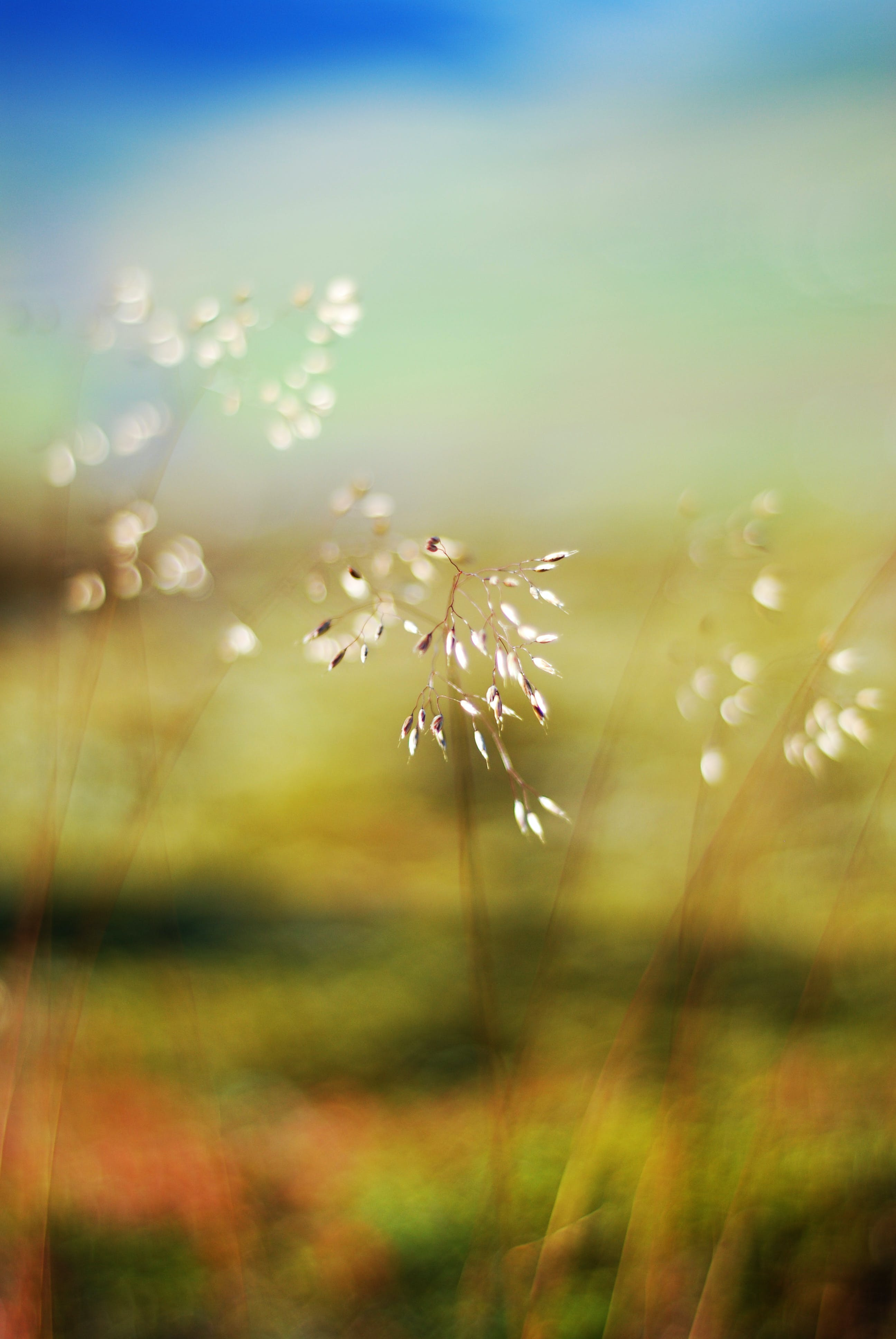 Free stock photo of colours, flower, grass, nature