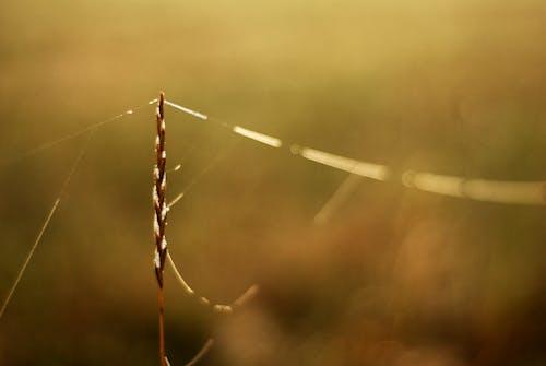 Free stock photo of backlight, grass, spiderweb