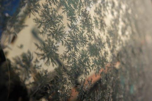 低温, 冬季, 冰, 玻璃 的 免费素材照片