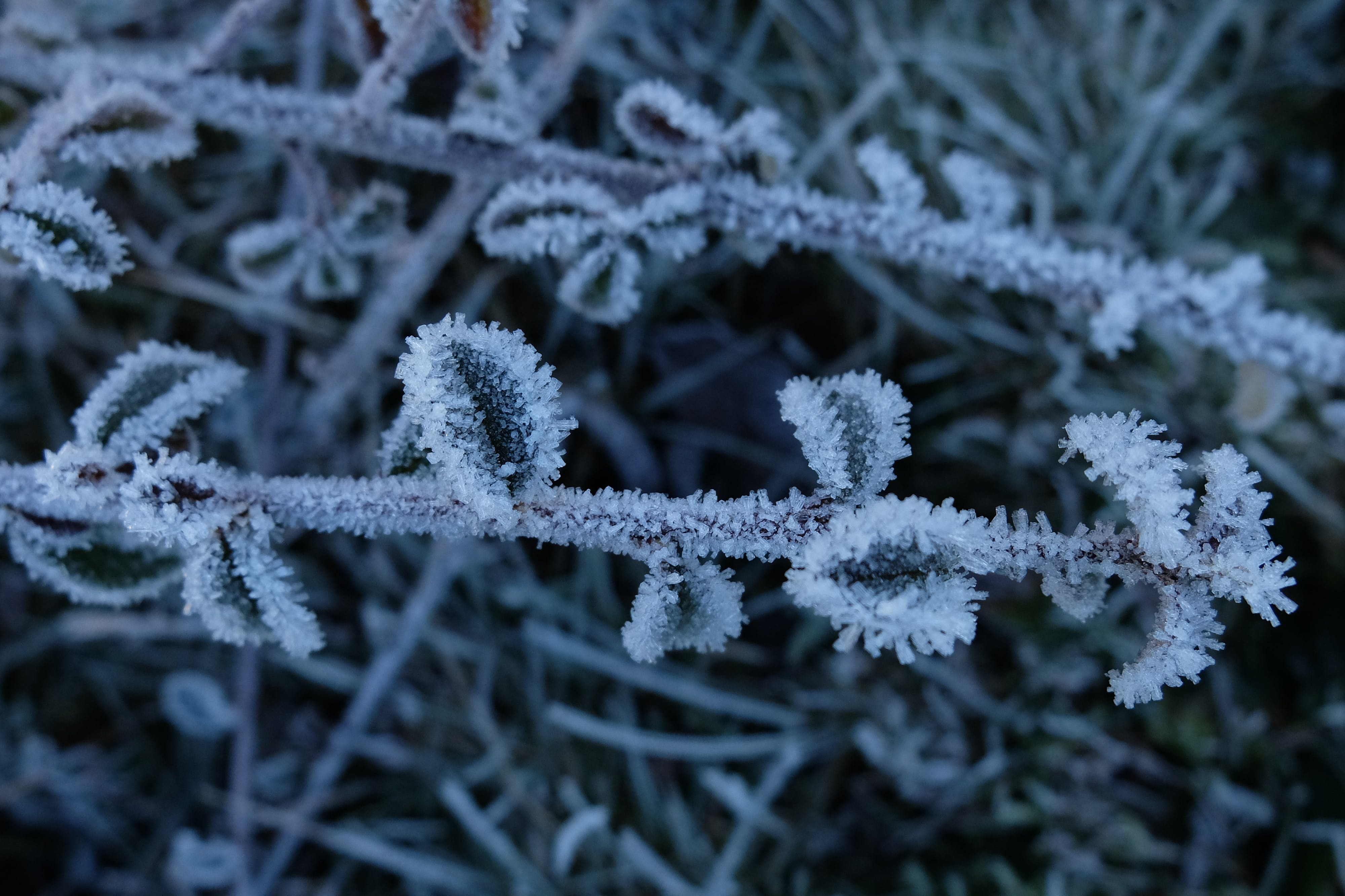 Free stock photo of branch, frost, ice, low temperature