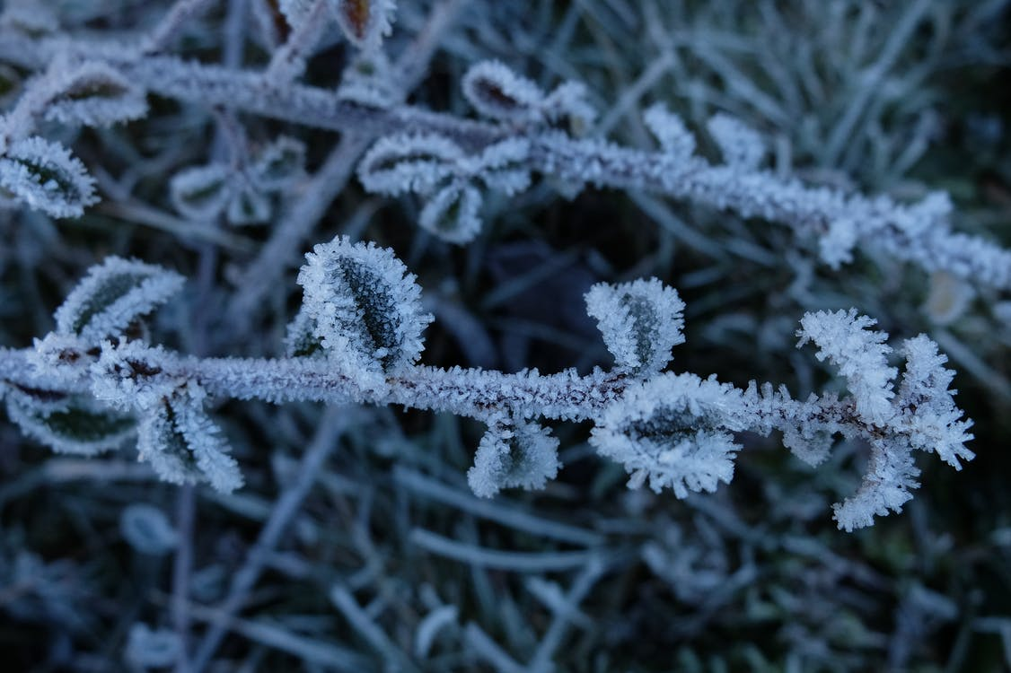 Free stock photo of branch, frost, ice