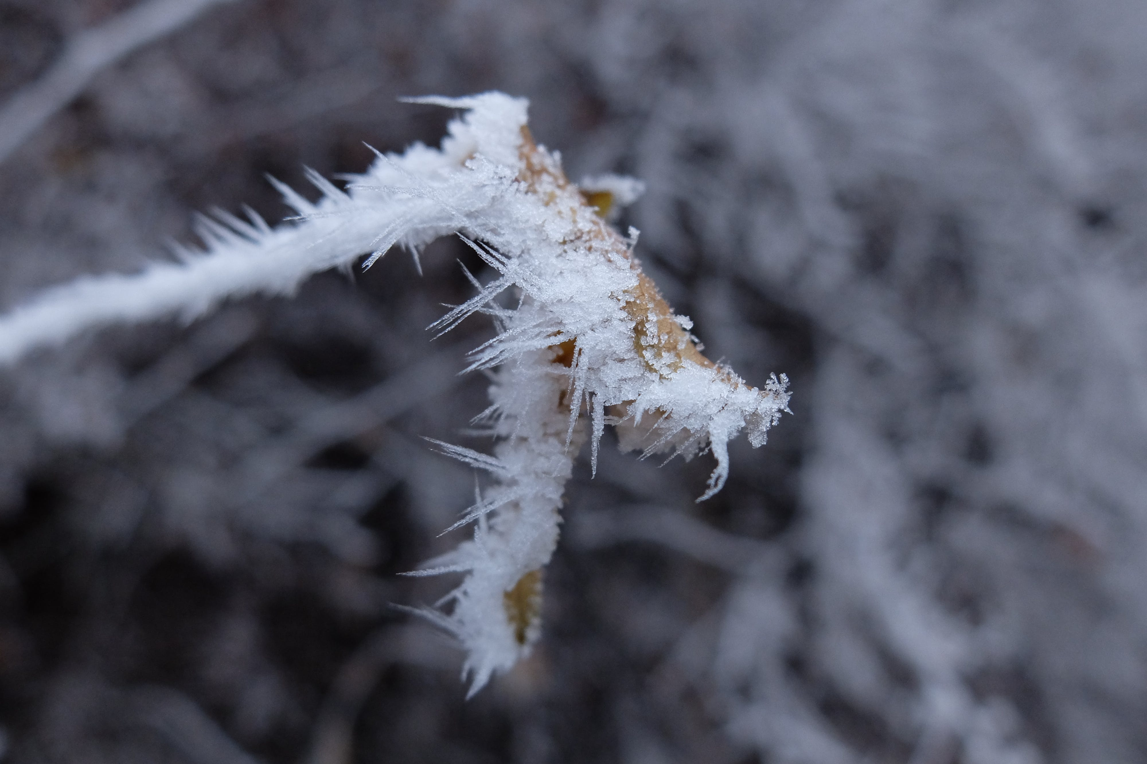 Free stock photo of frost, leaf, low temperature, nature