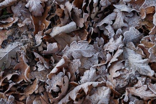 低温, 冬季, 天性, 霜 的 免费素材照片