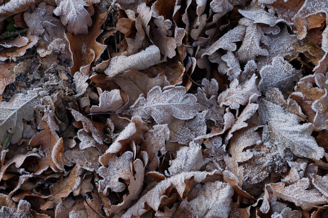 frost, low temperature, nature