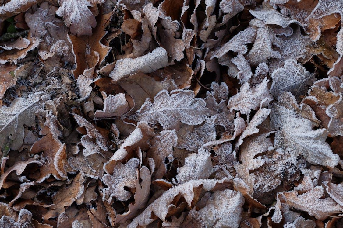 mùa đông, nhiệt độ thấp, sương giá