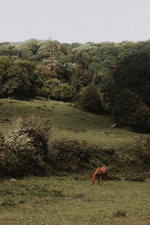 Distant chestnut horse grazing on grassy pasture near green bushes on summer day in hills