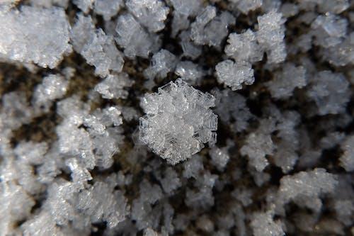 Безкоштовне стокове фото на тему «іній, зима, лід, низька температура»