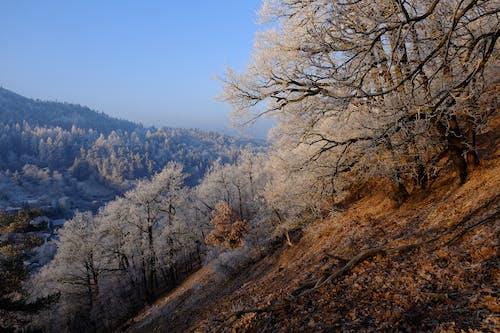 겨울, 나무, 눈, 바위의 무료 스톡 사진