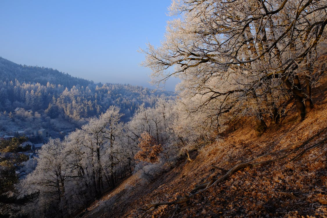 Free stock photo of early morning, forest, frost
