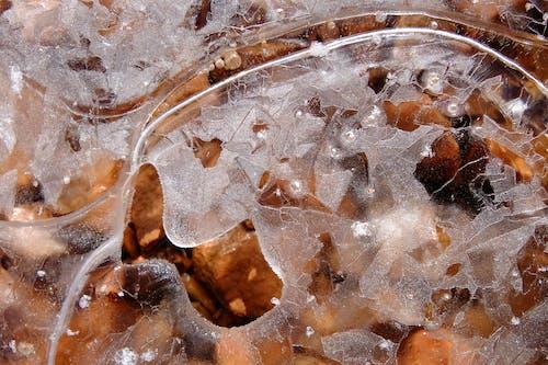 겨울, 서리, 얼음, 자연의 무료 스톡 사진
