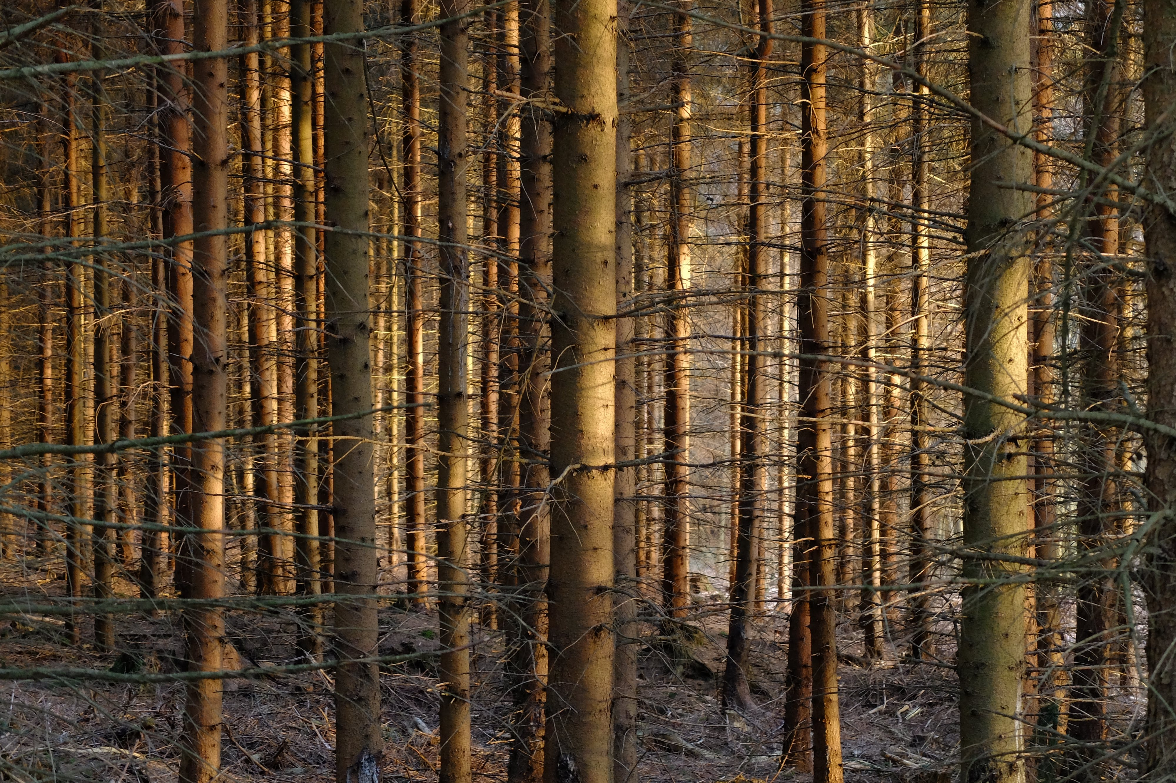 Free stock photo of forest, nature, trees