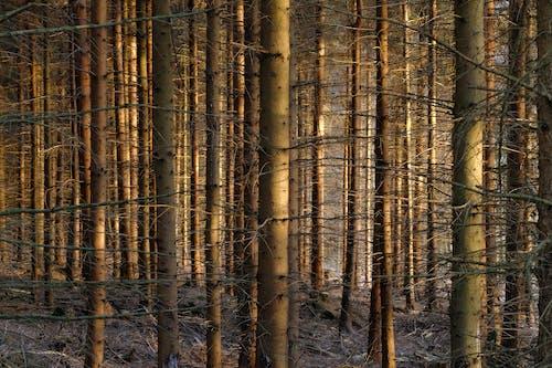 Безкоштовне стокове фото на тему «дерева, ліс, Природа»