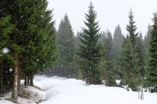 나무, 눈, 눈 내리는, 산의 무료 스톡 사진