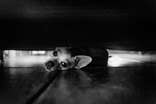 Photos gratuites de animal, animal de compagnie, bébé, blanco y negro