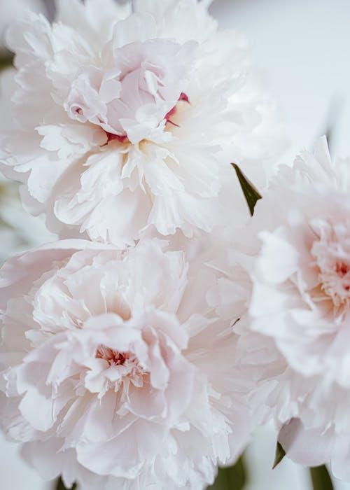 Kostenloses Stock Foto zu anordnung, aroma, blühen