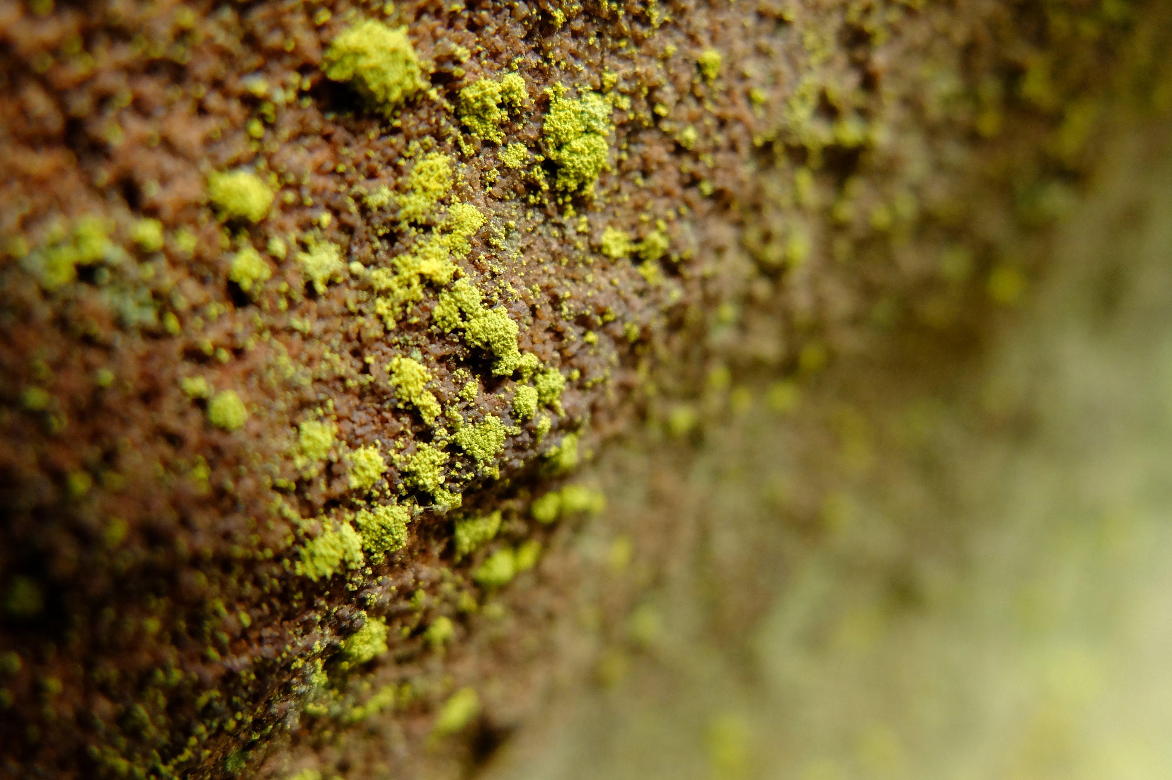 Free stock photo of algae, plant, stone, wet