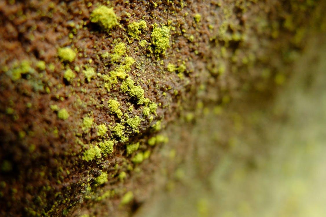 Free stock photo of algae, plant, stone