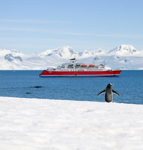 Penguin on snowy coast near ship