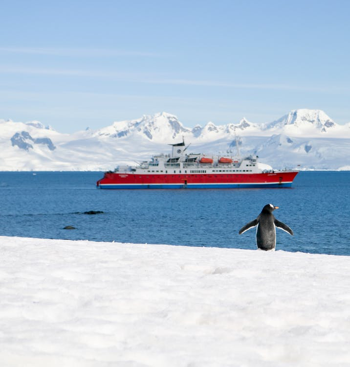 Wild penguin standing on snowy shore near blue sea with modern vessel in winter